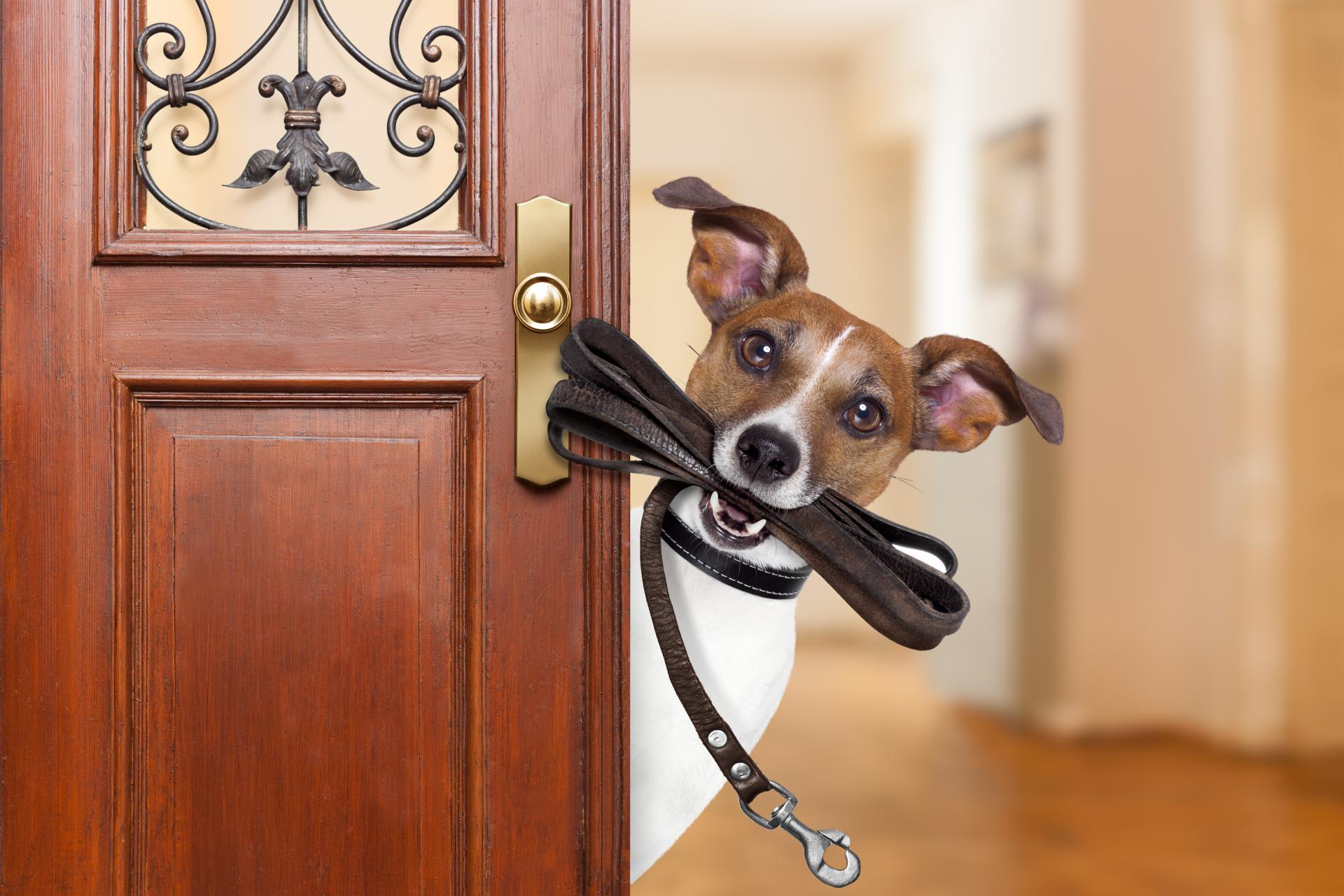 Vychovaný pes je bezpečný pes