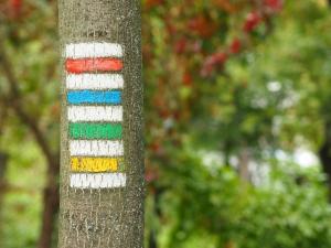 Turistické značení na stromě
